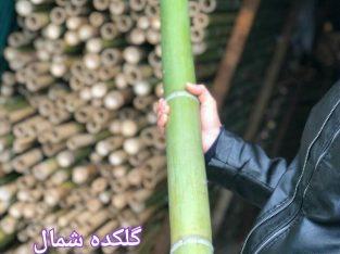 فروش چوب بامبو